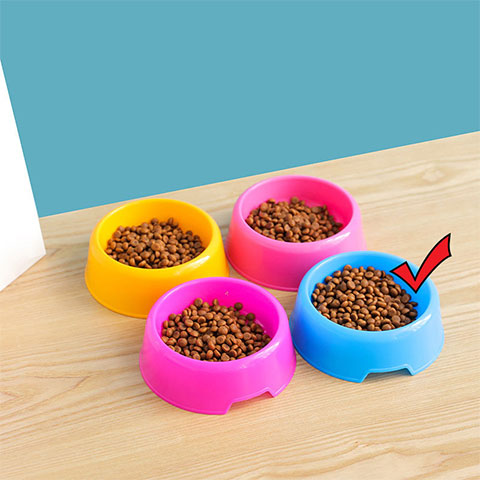 Candy Colored Pet Small Round Bowl - Blue