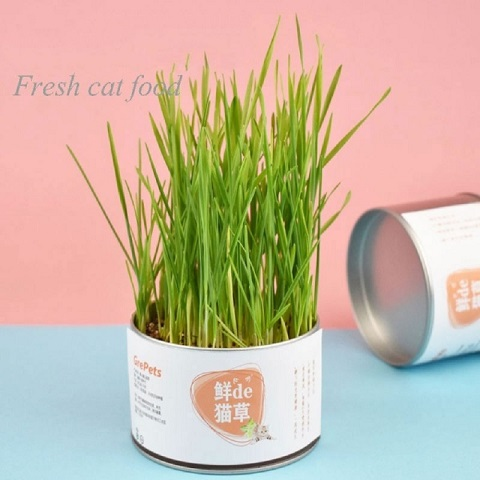 GrePets Lazy Canned Cat Grass (20203)