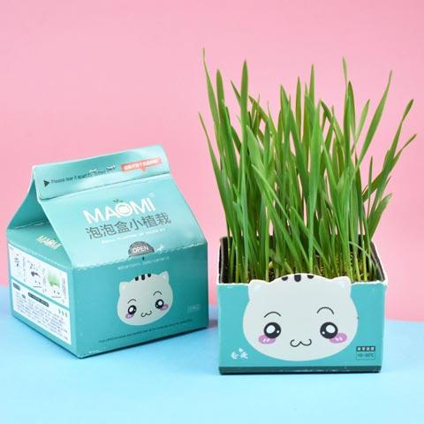 Maomi Bubble Box Cat Grass (20208)